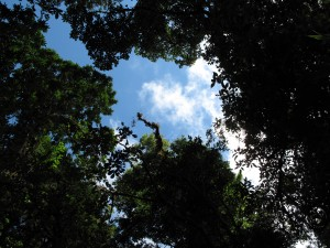 Monteverde_hike10