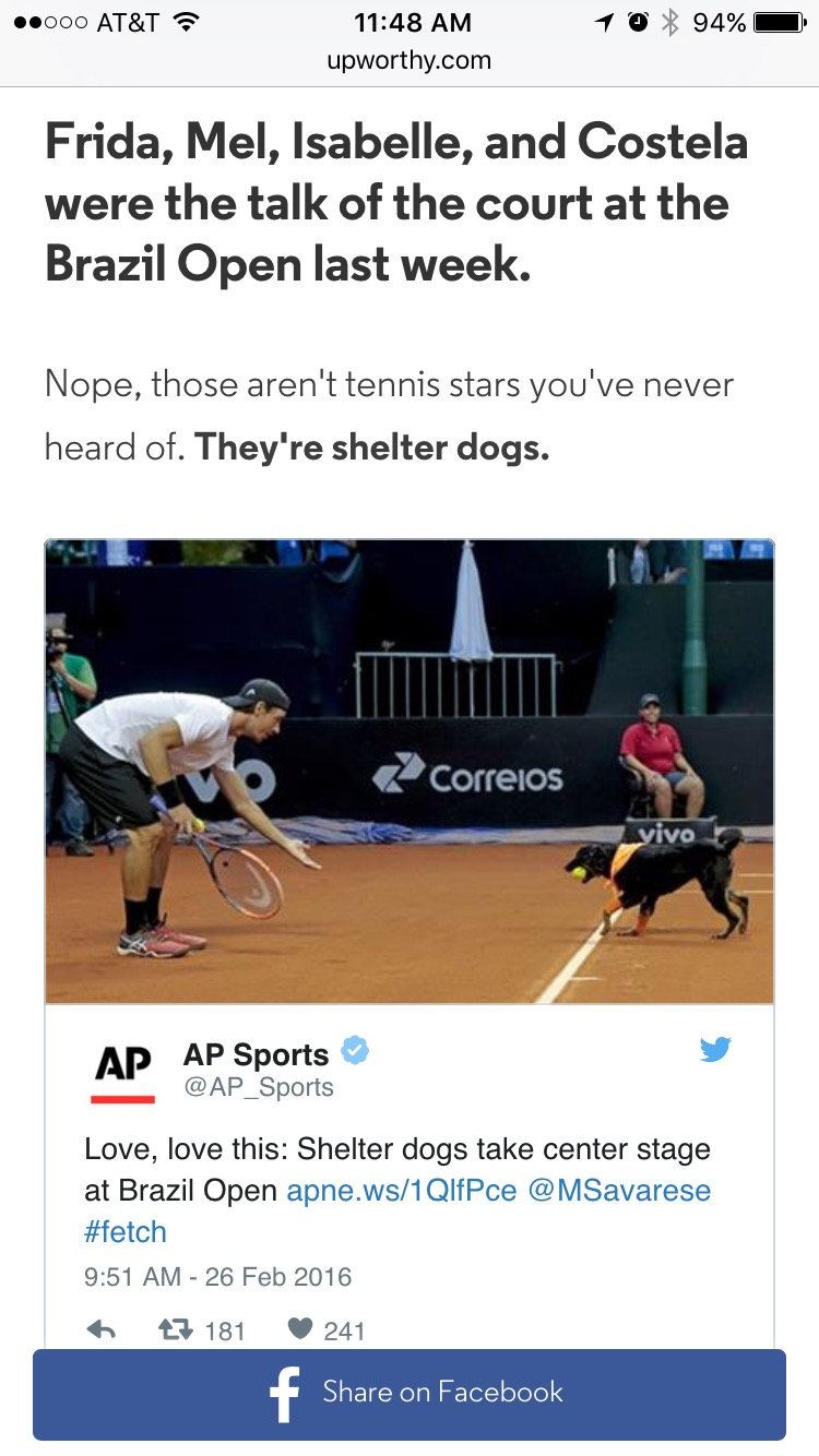 Shelter dogs as ball boys at Brazil Open